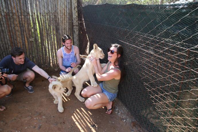 South Africa Lion Park petting lion cubs