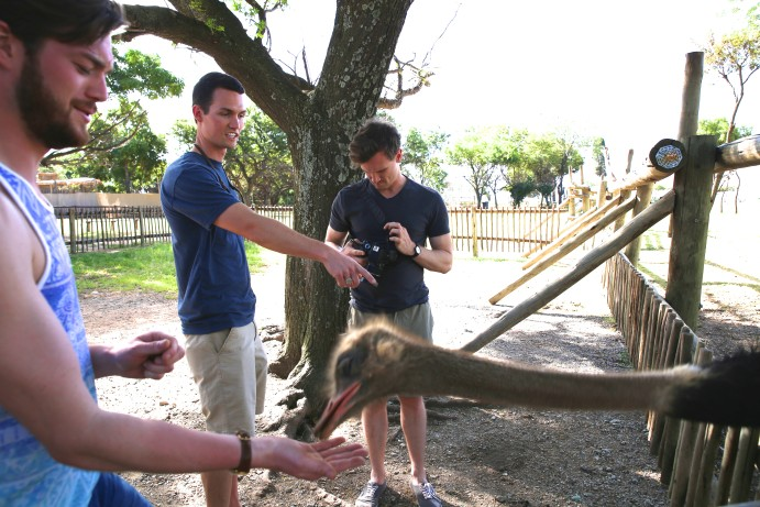 South Africa Lion Park ostrich
